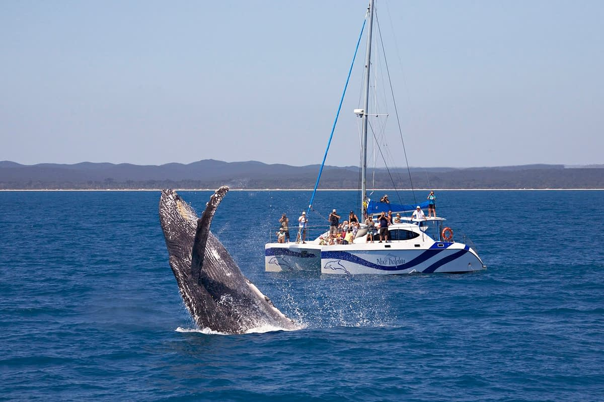 blue-dolphin-whale-watch